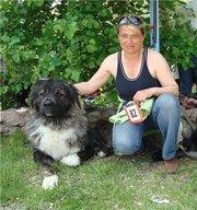 Щенки кавказской овчарки с документами