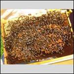 продам пчелопакеты 100 шт и пчеломаток